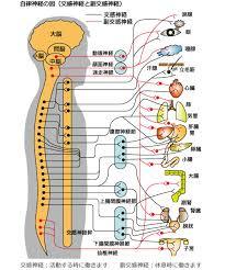 背骨、ヨガ、呼吸、自律神経、ボイスレッスン、ボイトレ、