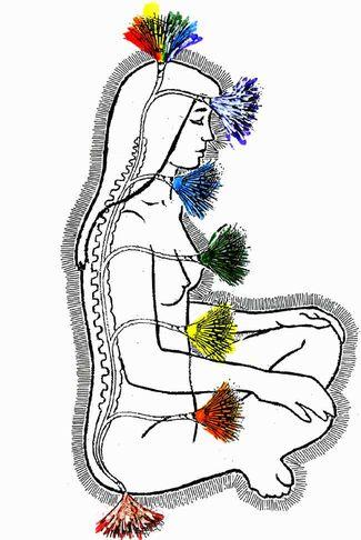 チャクラ、ヨーガ、自律神経、更年期、交感神経、副交感神経