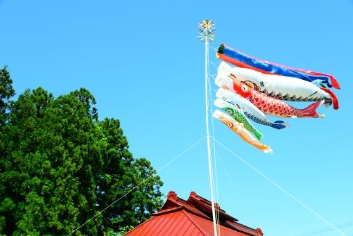 こどもの日、こいのぼり、童謡、うた、ボイス、レッスン、沖縄県、南城市