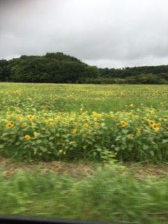 福島県、あべたみこ、南城市